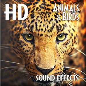 効果音素材集 hd animals birds sonicwire